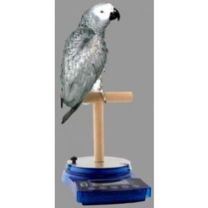 HBI Fugle T-stand
